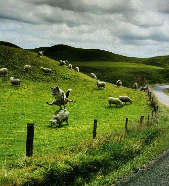 для лучший в пастухи собаку лучше самку двигатель троит холостых